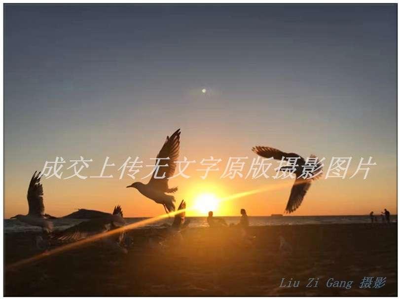 澳洲风光原色摄影《翱翔夕阳》